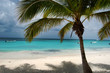 Beach beds under coconut palm with an ocean view