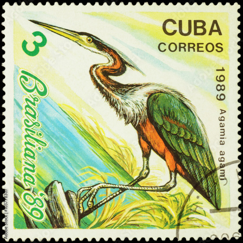 Poster  Agami heron (Agamia agami) on postage stamp