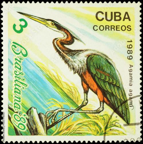 Fotografia  Agami heron (Agamia agami) on postage stamp