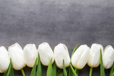 Fototapeta Tulipany - More white tulip on the grey background.