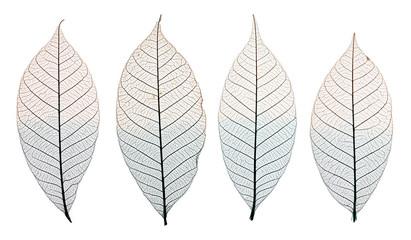 Listovi kostura izolirani na bijeloj boji. Komplet ukrasnih listova kostura izoliranih na bijeloj.