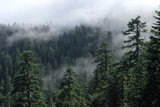 Fototapeta Las - Fog cover the forest. Misty forest view from Larch Mount. USA Pacific Northwest, Oregon.