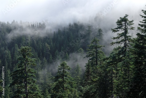 Fotobehang Bossen Fog cover the forest. Misty forest view from Larch Mount. USA Pacific Northwest, Oregon.