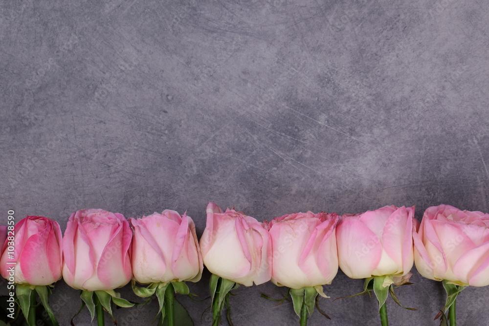 Fototapeta Różowe Róże, - obraz na płótnie