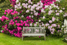 Rhododendron Garden With Woode...