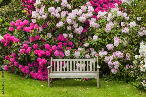 In de dag Tuin Rhododendron garden with wooden bench.