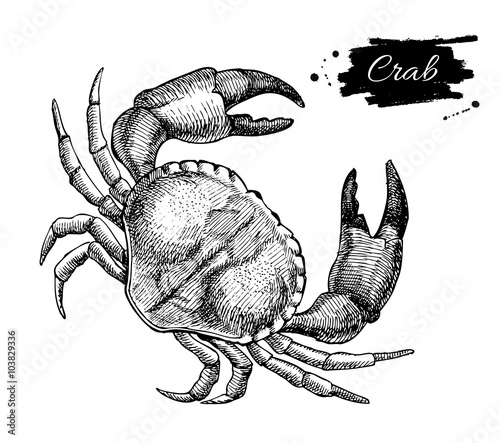 Photo  Vector vintage crab drawing. Hand drawn monochrome seafood illus