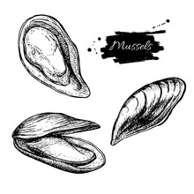 Vector Vintage Mussel Set Draw...