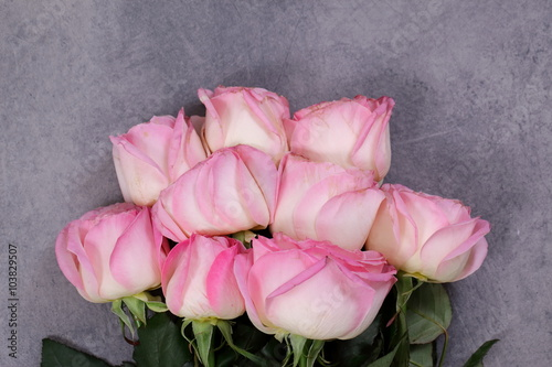 Fototapeta Różowe Róże, obraz na płótnie