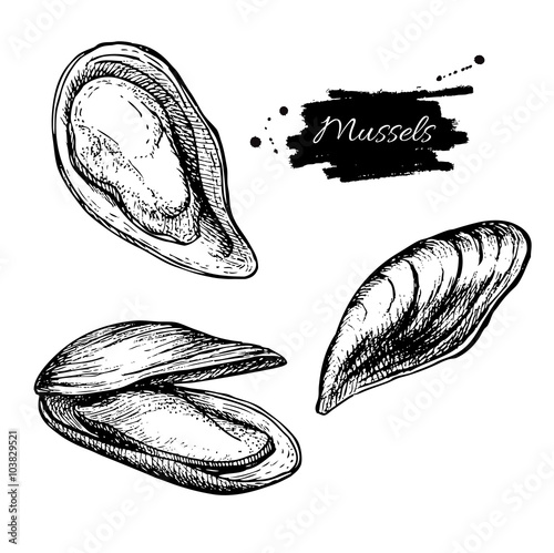 Photo  Vector vintage mussel set drawing. Hand drawn monochrome seafood