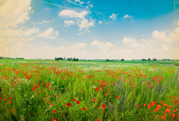 Panel Szklany Field of bright red corn poppy flowers in summer