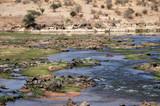 Fototapeta Sawanna - A river in the savanna - Tanzania - Africa 42