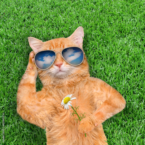 Poster  Cat wearing sunglasses relaxing in the grass.