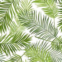 fototapeta jednolite tło tropikalnych liści palmowych