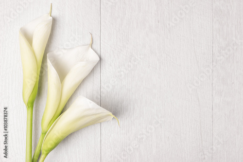 Photo  Elegant spring flower, calla lily