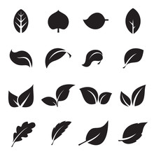 Collection Of Leaf Icons. Blac...