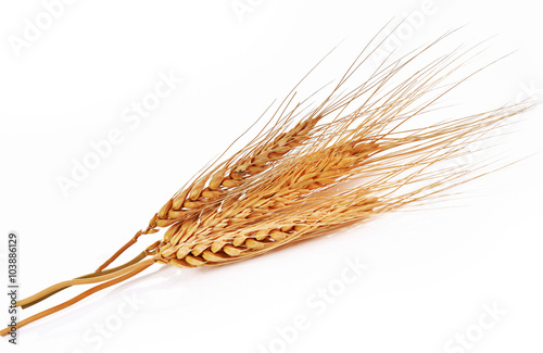barley ear over a white background Fotobehang
