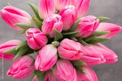 obraz lub plakat More tulip on the grey background.