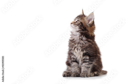 Valokuva kitten sitting on white background