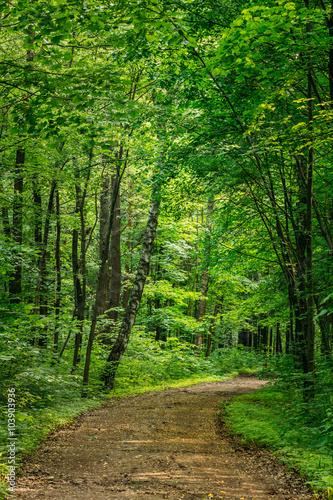 Aluminium Prints Bestsellers Beautiful Countryside Road Lane Path Way through summer deciduou