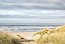 Ocean, Grassy Dunes And Sandy Beach On A Gray Day. Beautiful Muted Colors