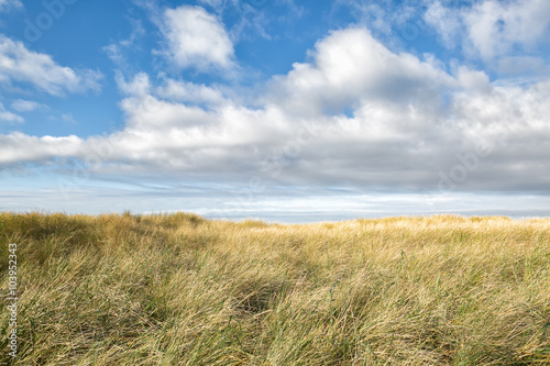 Windswept sea grass under a dramatic blue sky with clouds on the Pacific Northwest coast Fototapet