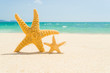 Two starfish with ocean , beach and seascape, shallow dof