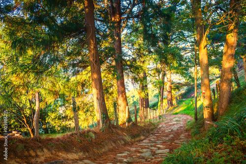 obraz PCV Basque Country Spain Landscape near the Village Orio