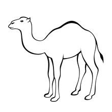 Camel Black White Isolated Illustration Vector