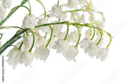 Staande foto Lelietje van dalen Lily of the Valley - Convallaria Majalis