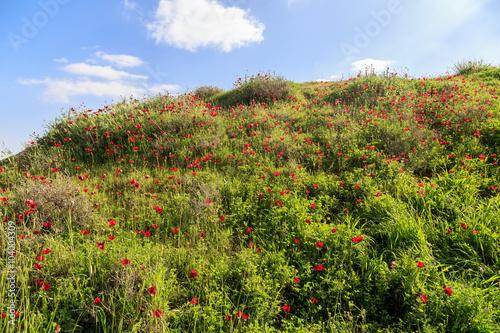 czerwone-kwiaty-na-tle-trawy-i-nieba