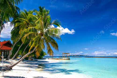 Palm at white sand beach on tropical resort paradise Maldives island