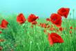 canvas print picture - Feld mit roten Mohnblumen im Sommer