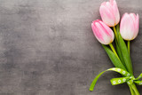Fototapeta Tulips - Tulip on the grey  background.