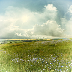Fototapeta Vintage blue flower meadow