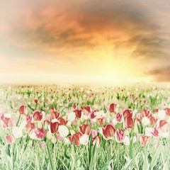 Panel Szklany Vintage Large tulip flower meadow vintage