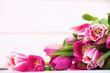 zart blühende tulpen
