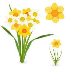 Collection Of Daffodils. Sprin...