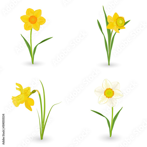 Photographie  collection lovely daffodils. spring flowers for your design