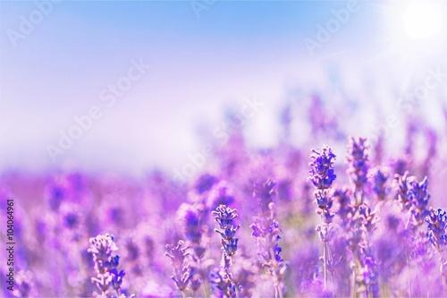 Cadres-photo bureau Lavande Flower.