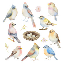 Watercolor Vector Set Of Birds.