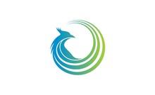 Bird Swirl Logo