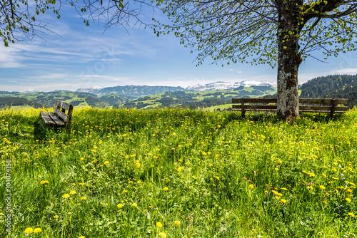 mata magnetyczna Frühlingswiese im Emmental, Schweiz