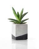 Plant in a concrete painted cubic pot
