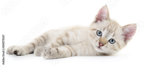 Papiers peints Chat Kitten on a white background