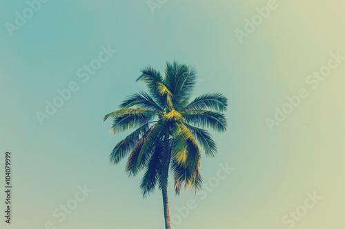 palma-kokosowa