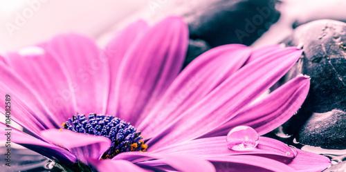 rozowy-piekny-kwiat