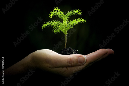 Fotografie, Obraz  Cradling New Life/ Hand Holding Baby Plant On Dark Background