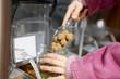 Marzipankartoffeln kaufen ohne Verpackung