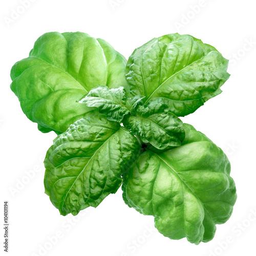 Tableau sur Toile Lettuce leaf basil